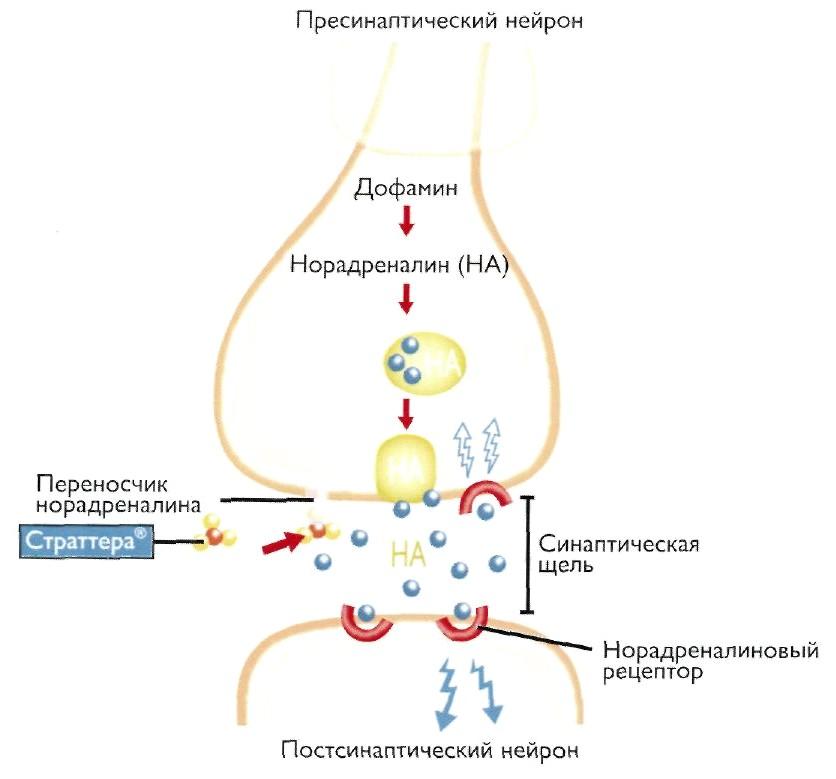 Atomoxetine Hydrochloride Vs. Adderall